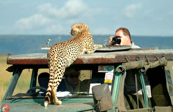 6 Days Kenya Safari Road Package